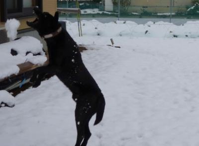番犬と遊ぶ2