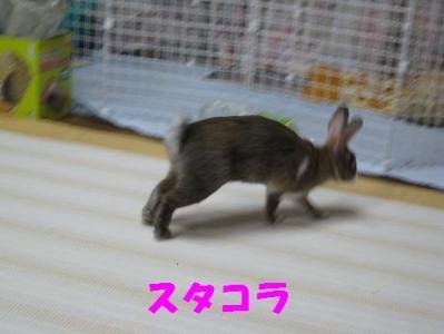 IMG_2583S