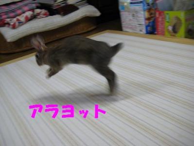 IMG_2572S.jpg