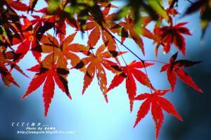 10DSC_70190001.jpg