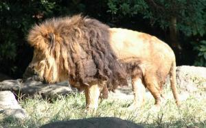 7ライオン
