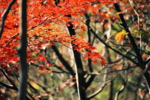4高縄山紅葉2004.11.070001