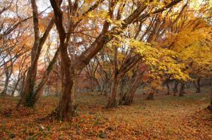 16稲荷山神社07.12.020001