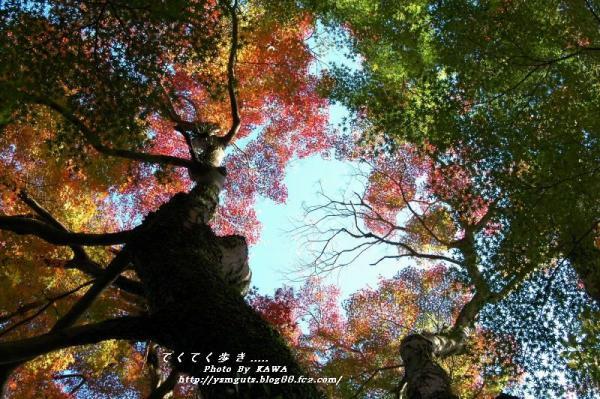 6惣河内神社