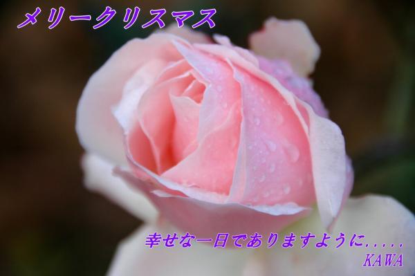 薔薇DSC_96080001