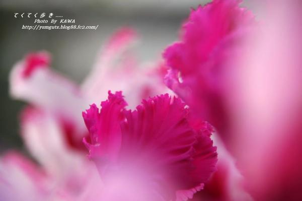 1花卉_08910001