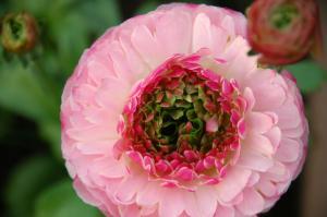 3花卉_08770001