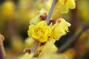 4花卉_08720001