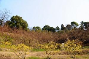 4藤山_03990001