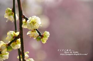 5緑化_06090001