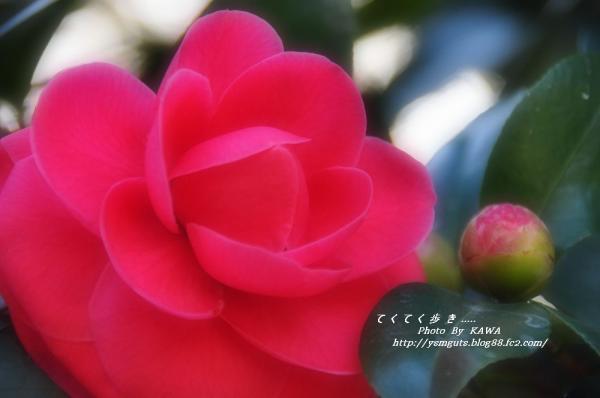 6緑化_0906_070