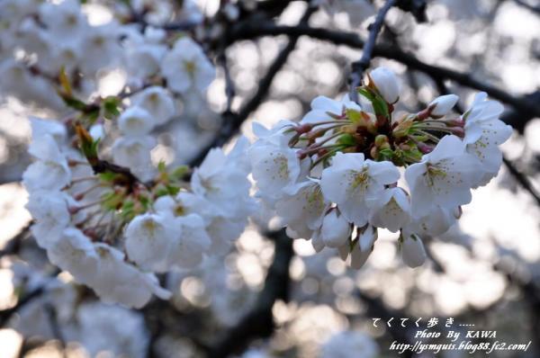 9大宝寺_2481