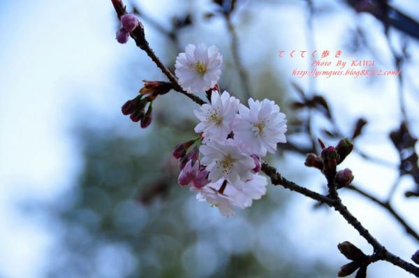 1西法寺_3693