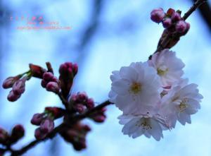 4西法寺_3690