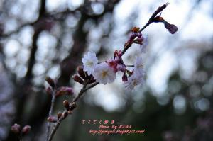6西法寺_3696