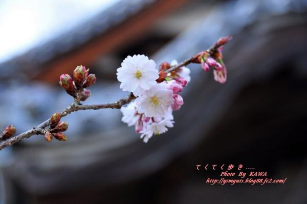 8西法寺_3698