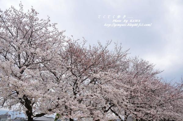 2石手川_3720