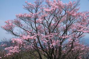 3 2008.04.26篠山