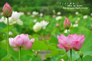 6浄瑠璃寺_8842