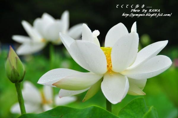 11浄瑠璃寺_8830