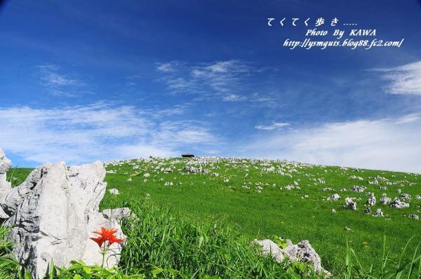 1ヒメユリ_9210