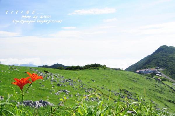 2ヒメユリ_9215
