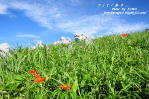 12ヒメユリ_9198