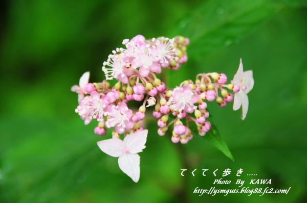 7風穴_9615