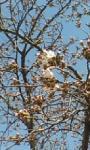 桜、開花中♪