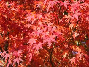 momiji_convert_20080824094947.jpg