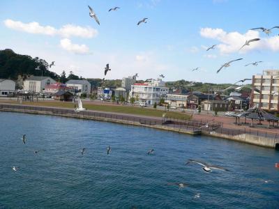 写真キャプション=関西からの玄関口となる佐渡・小木港で群舞するカモメたち