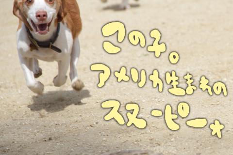 0517オレ様はレモンビーグル11