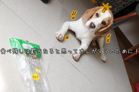 0627オレ様はレモンビーグル3