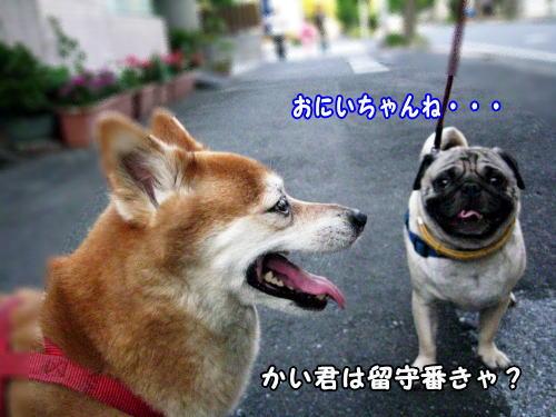 IMG_0225_20080728223227.jpg