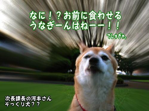 IMG_0234.jpg