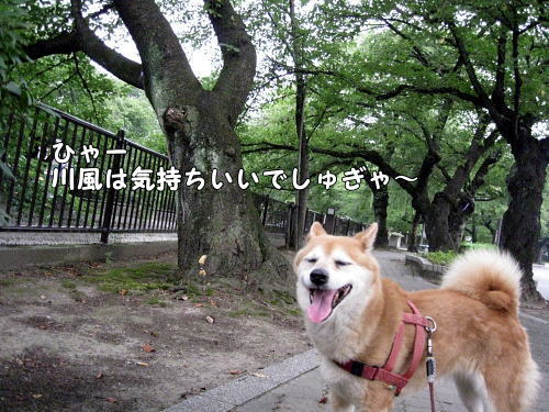 IMG_0474.jpg