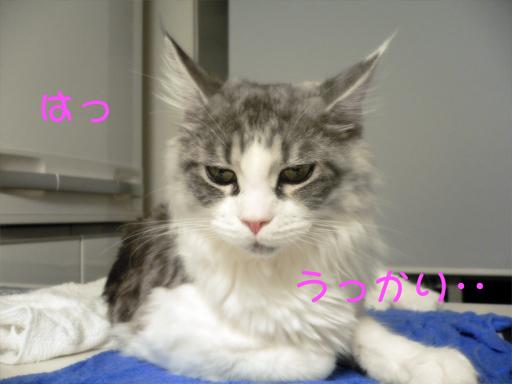gumiheijousin4.jpg
