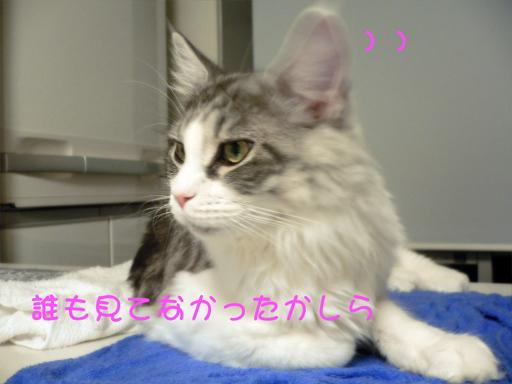 gumiheijousin5.jpg