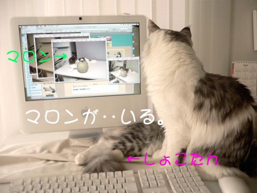 maccat1.jpg