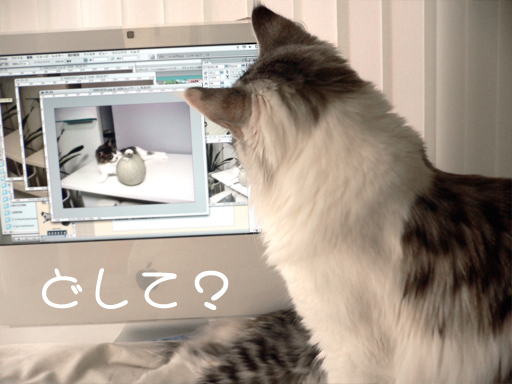 maccat2.jpg
