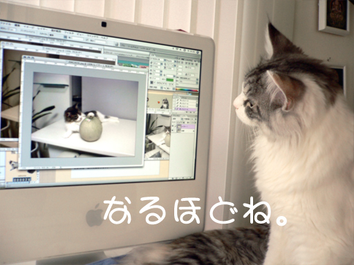 maccat3.jpg