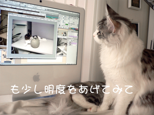 maccat4.jpg
