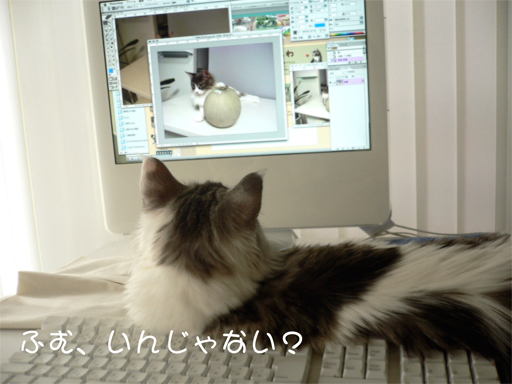 maccat5.jpg
