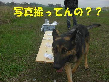 CIMG1499_sh01.jpg