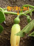 20110726-05.jpg