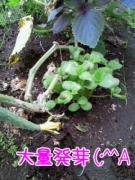 20110731-03.jpg