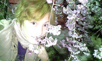 大垣城枝垂れ桜とゆうまアップ