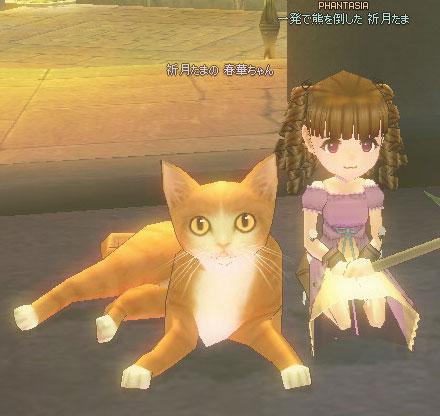 猫のサイズが