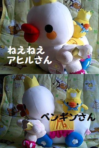 Happy5thキイロイトリぬいぐるみXL-5