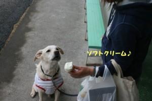 太郎とお出かけ 028
